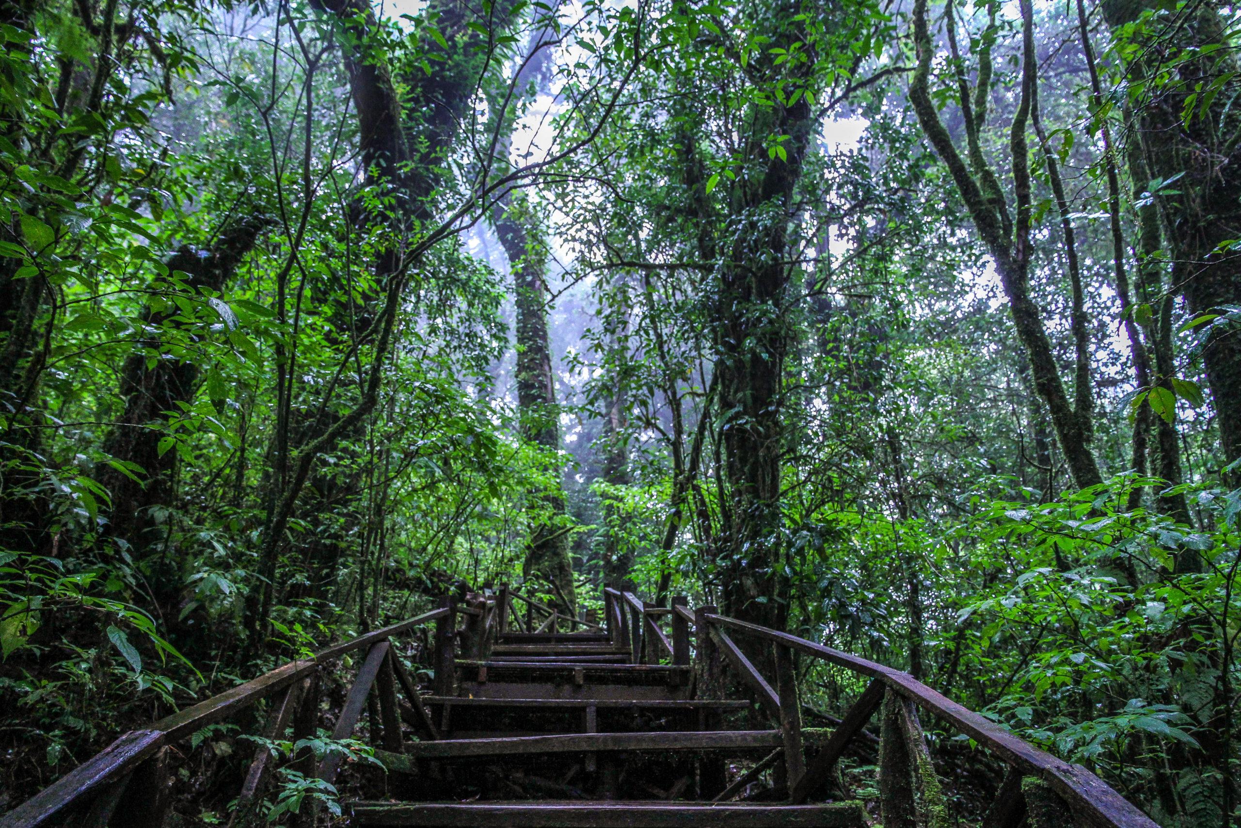 Национальный парк Дойинтанон
