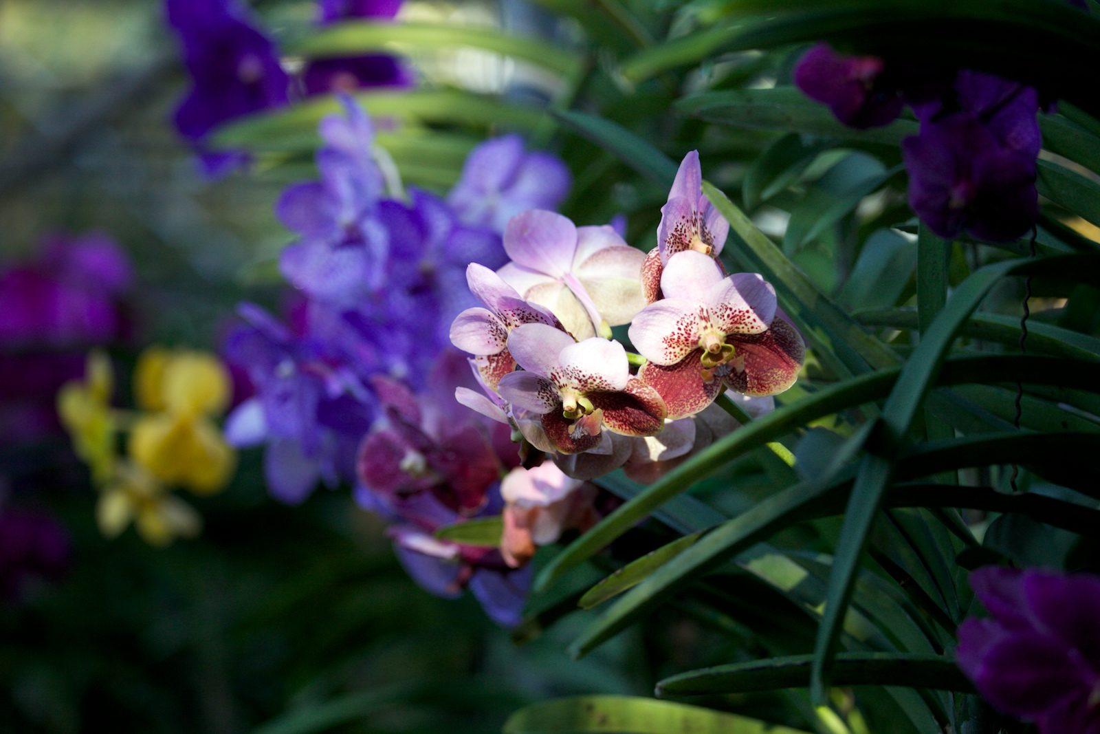 Ферма орхидей