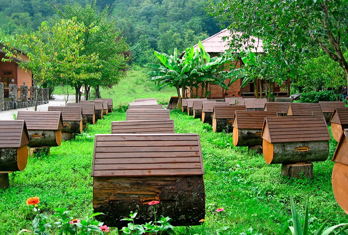 Пасека в горной местности Абхазии