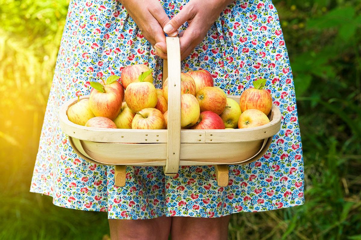Яблочки на сидр собраны!