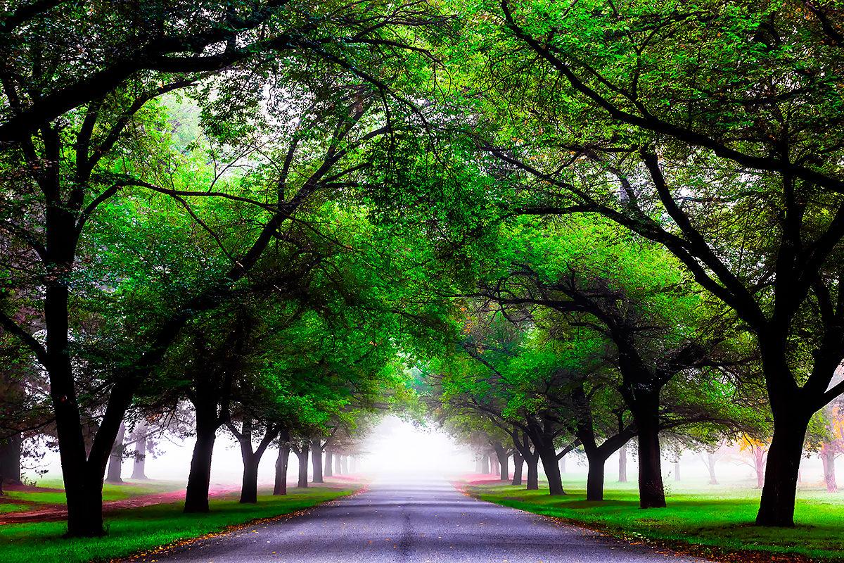 райский уголок зеленого парка Канберры