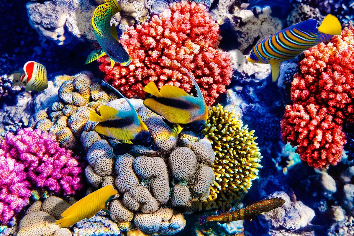Пестрые представители морской фауны