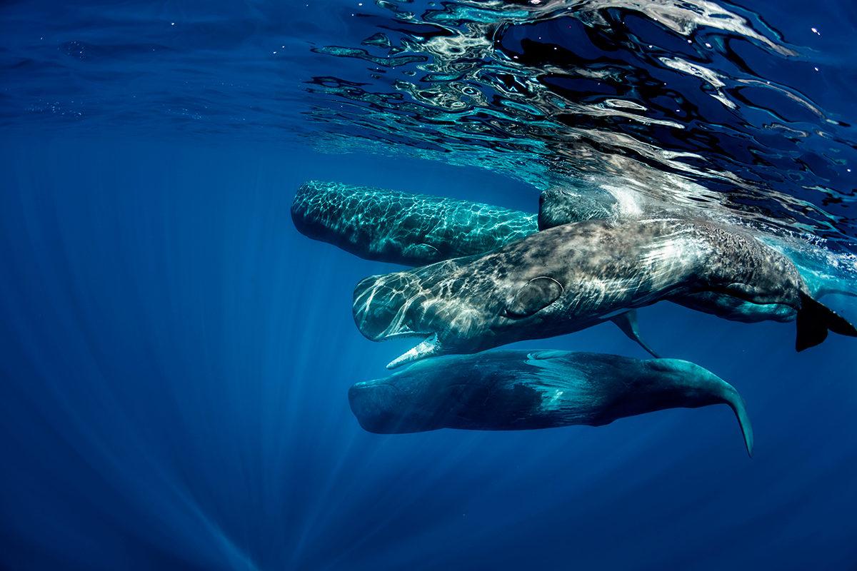 Захватывающие дух воды Азорских островов