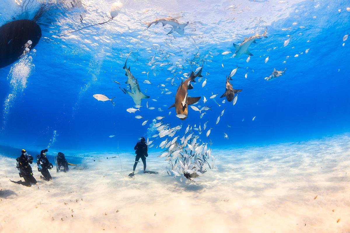 Подводные развлечения