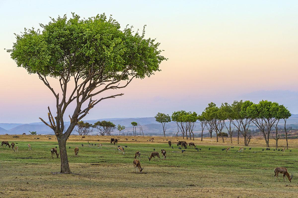 Животный мир Bissau