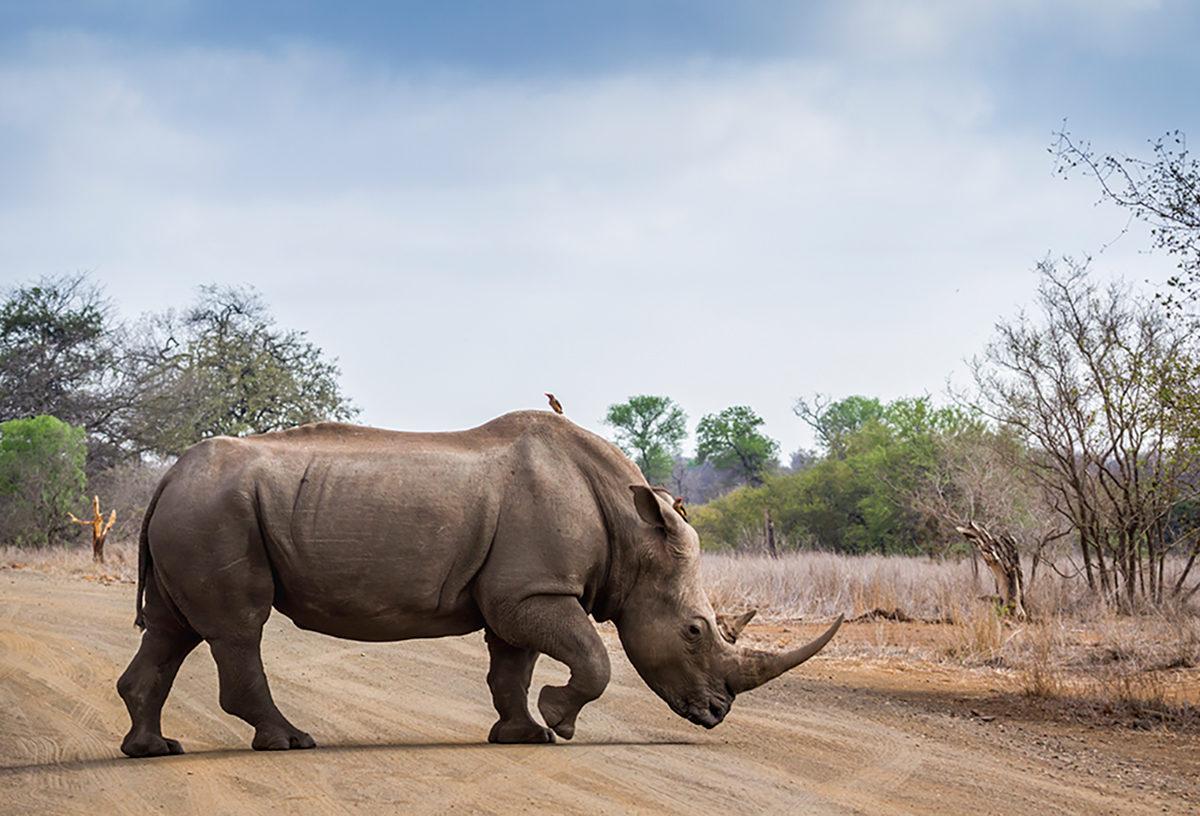 Поездка в мир дикой природы