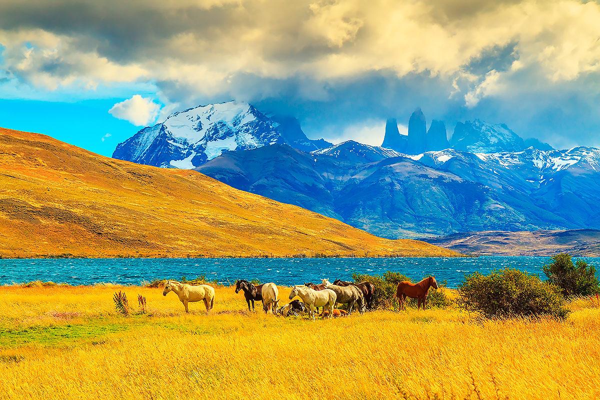Стадо мустангов на фоне гор