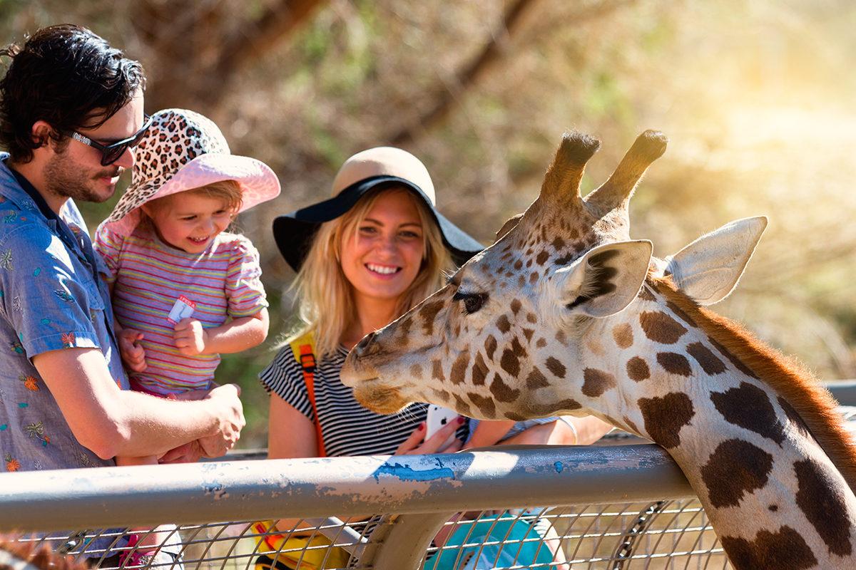 Знакомство с жирафом