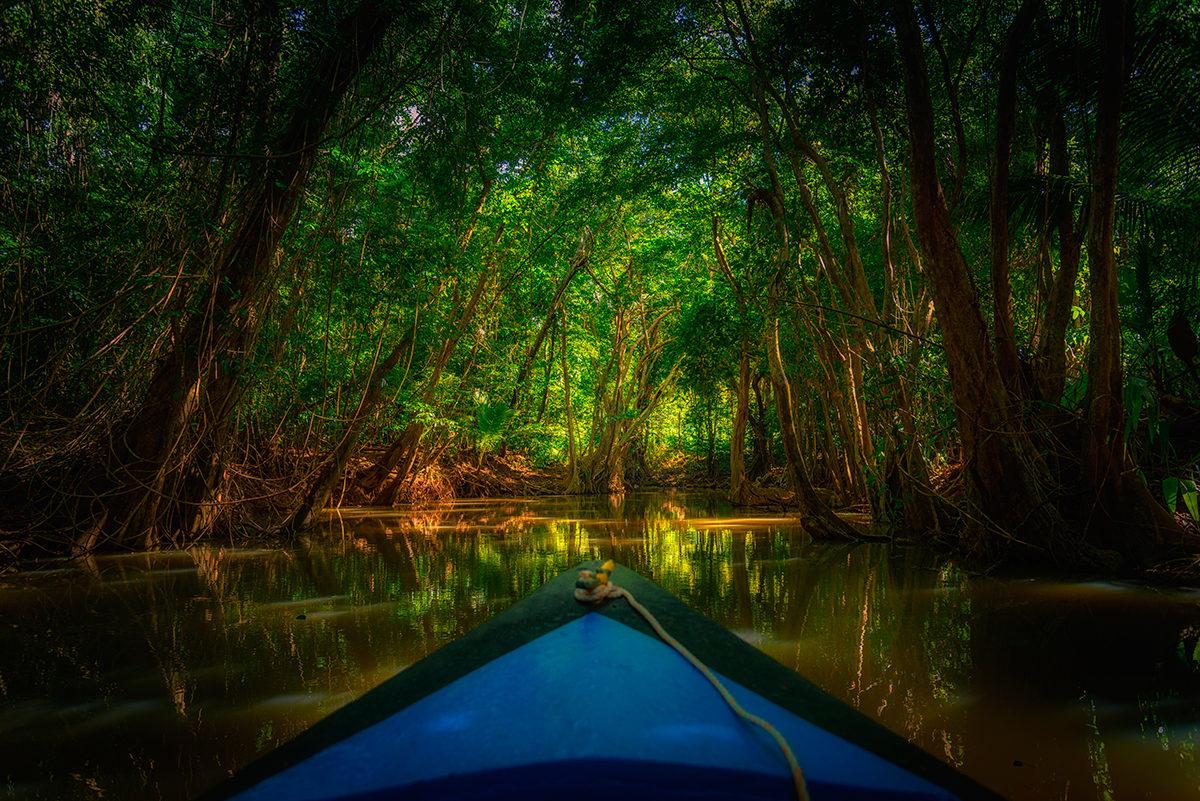 Экскурсия в тропическом лесу Доминиканы