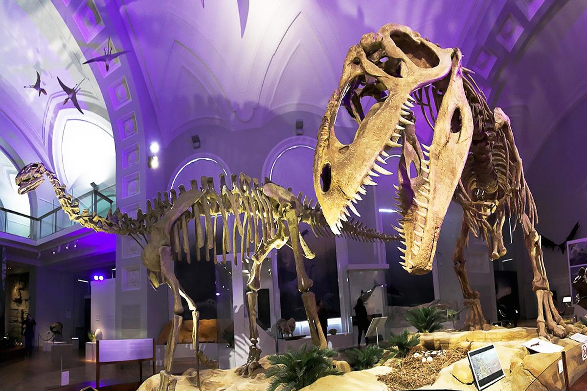 Скелеты динозавров в Музее естествознания, Хельсинки