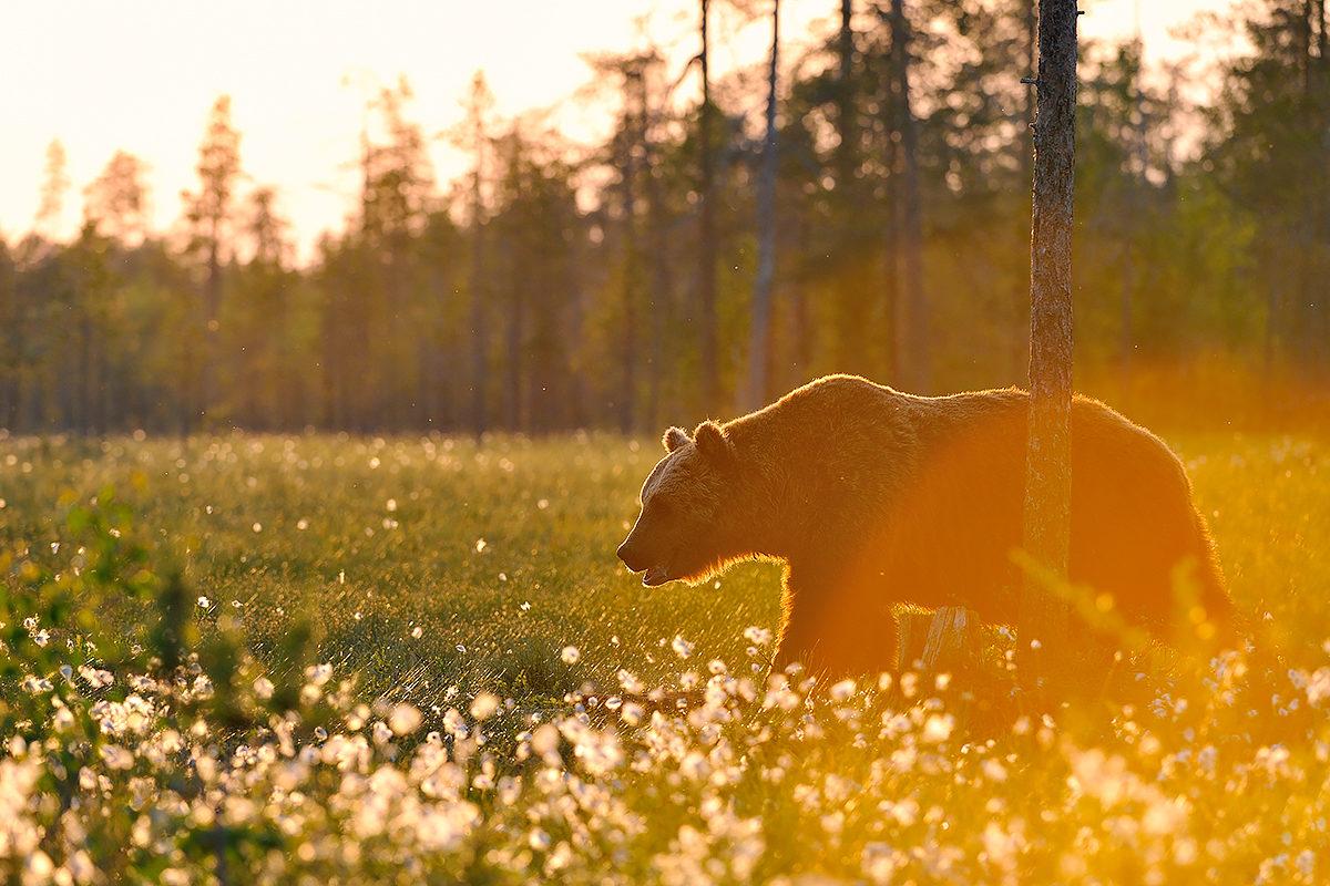 В заповедниках Финляндии