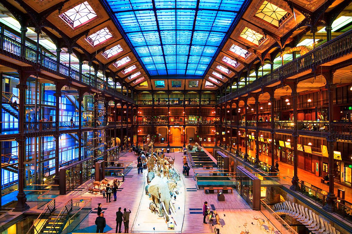 Галерея эволюции, Национальный музей естественной истории