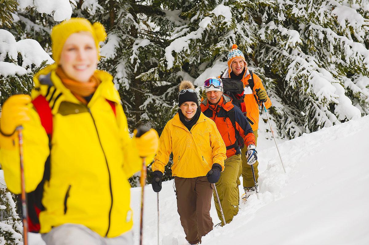 Лес, пушистый снег, снегоуступы