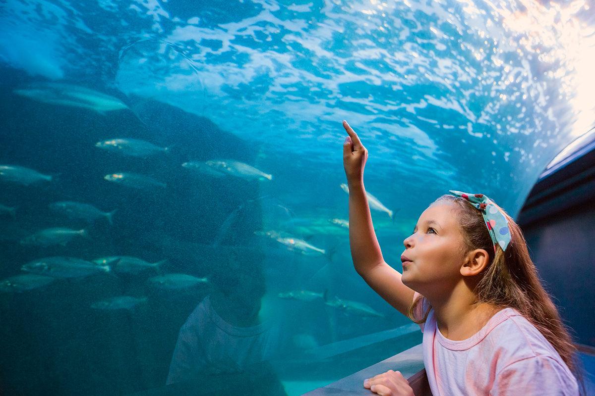 Детское любопытство, Аквариум в Лионе