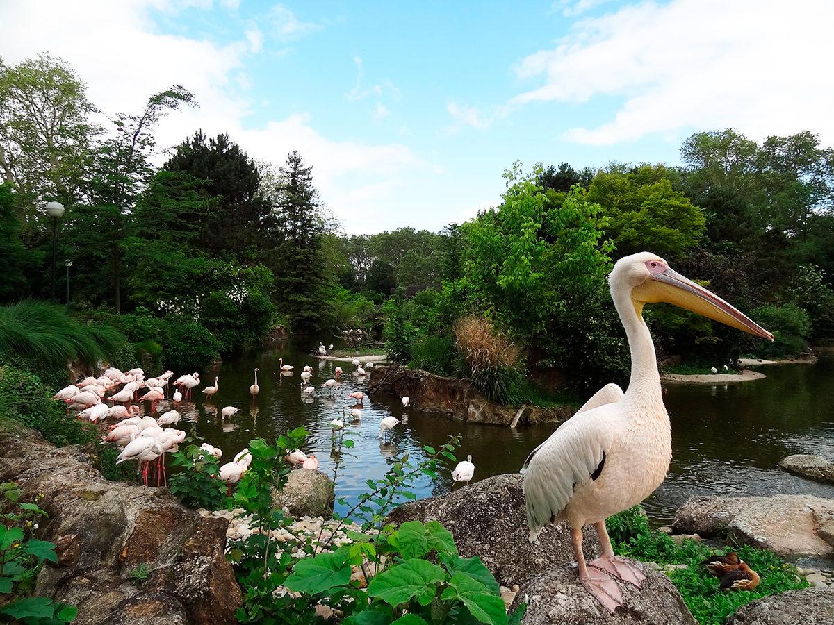 Пеликаны и фламинго