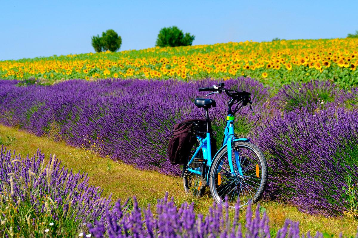 Красота цветочных полей