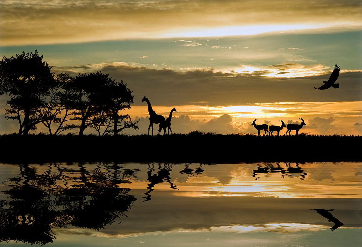 Завораживающая Африка