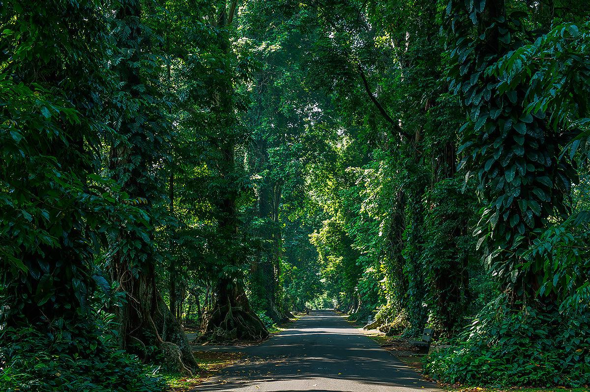 Дорога в Богорском ботаническом саду