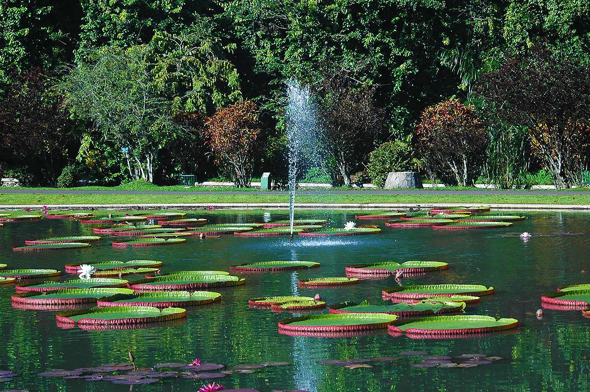 Пруд с лотосами, Богорский ботанический сад