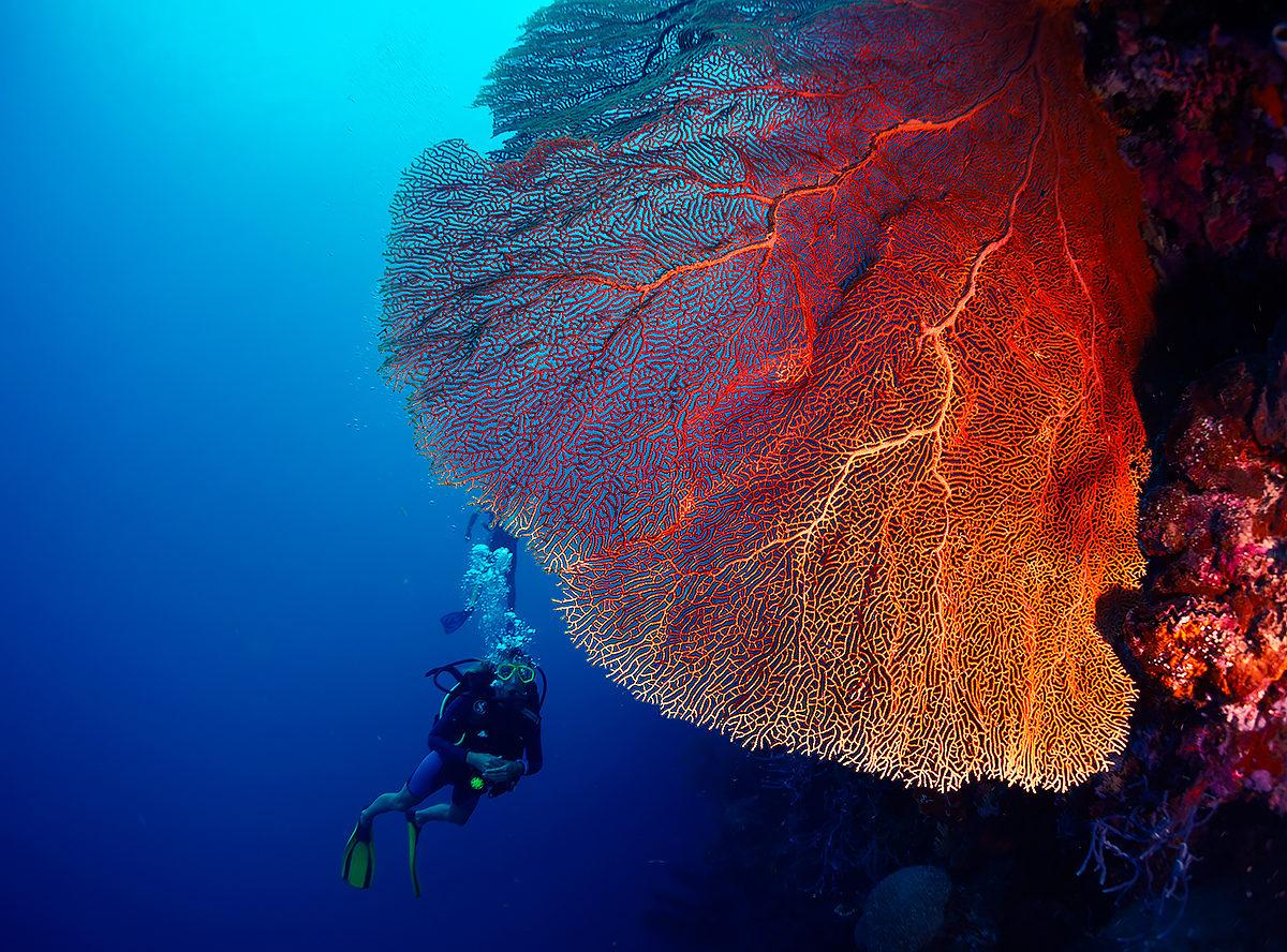 Подводный рай