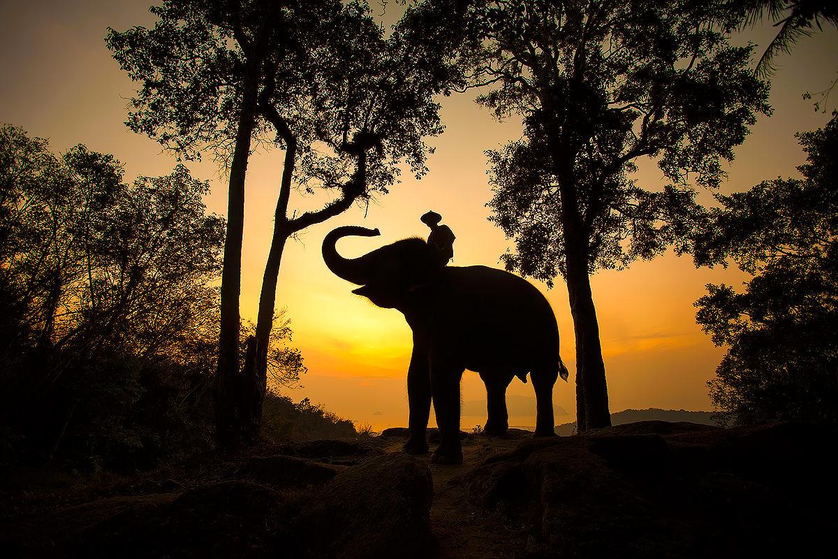 Страна слонов, Лаос