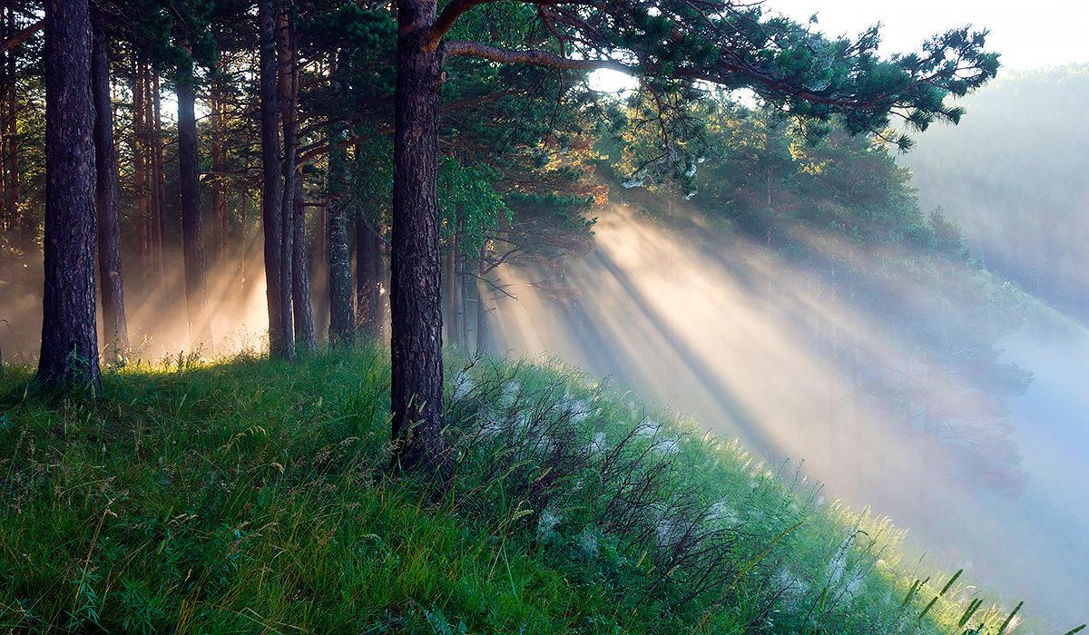 Чистейший воздух соснового леса