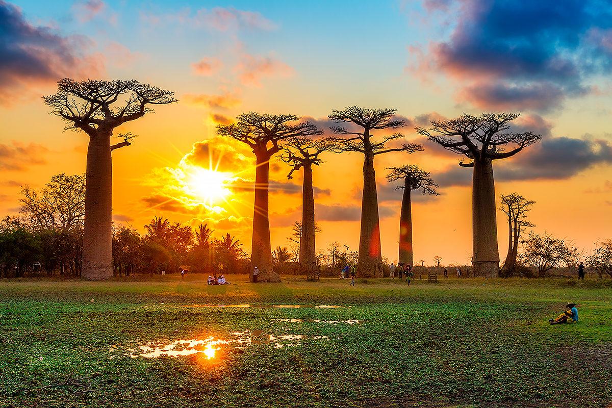 Баобабы, Мадагаскар