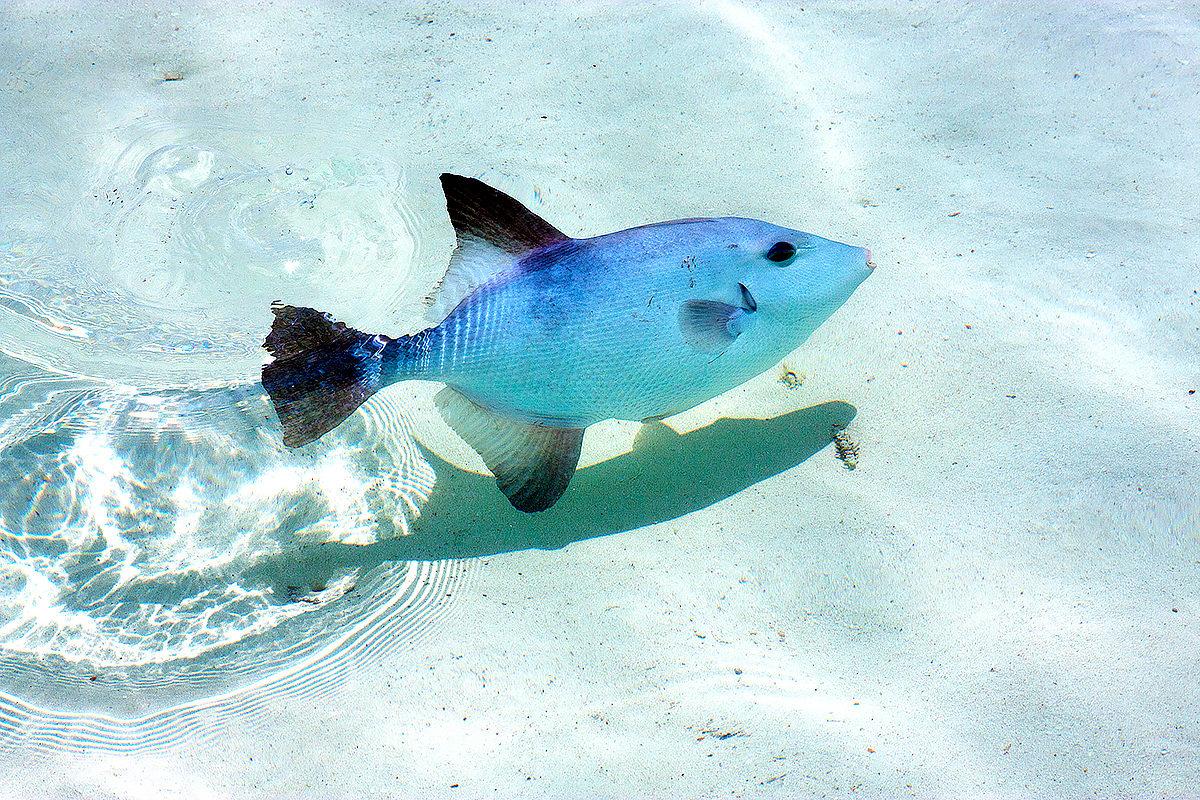 Прозрачные воды, остров Контой
