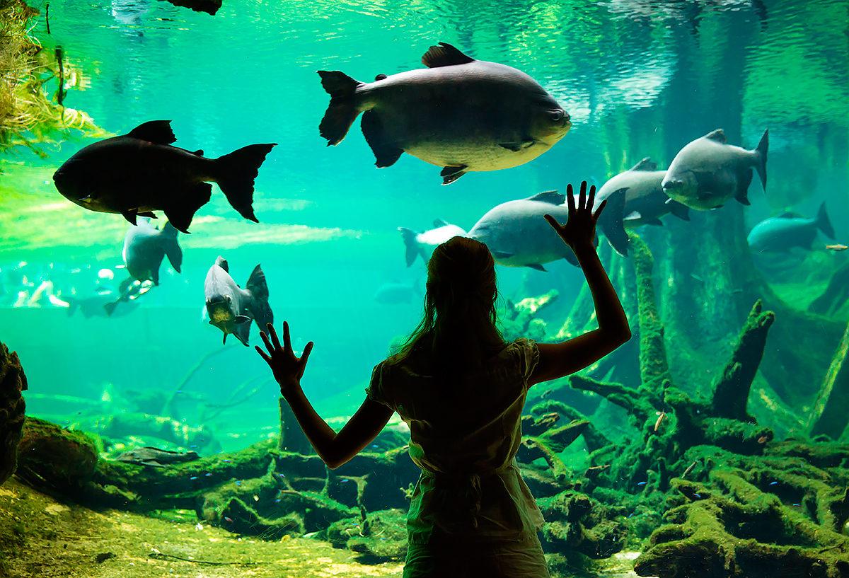 Жители морей и рек