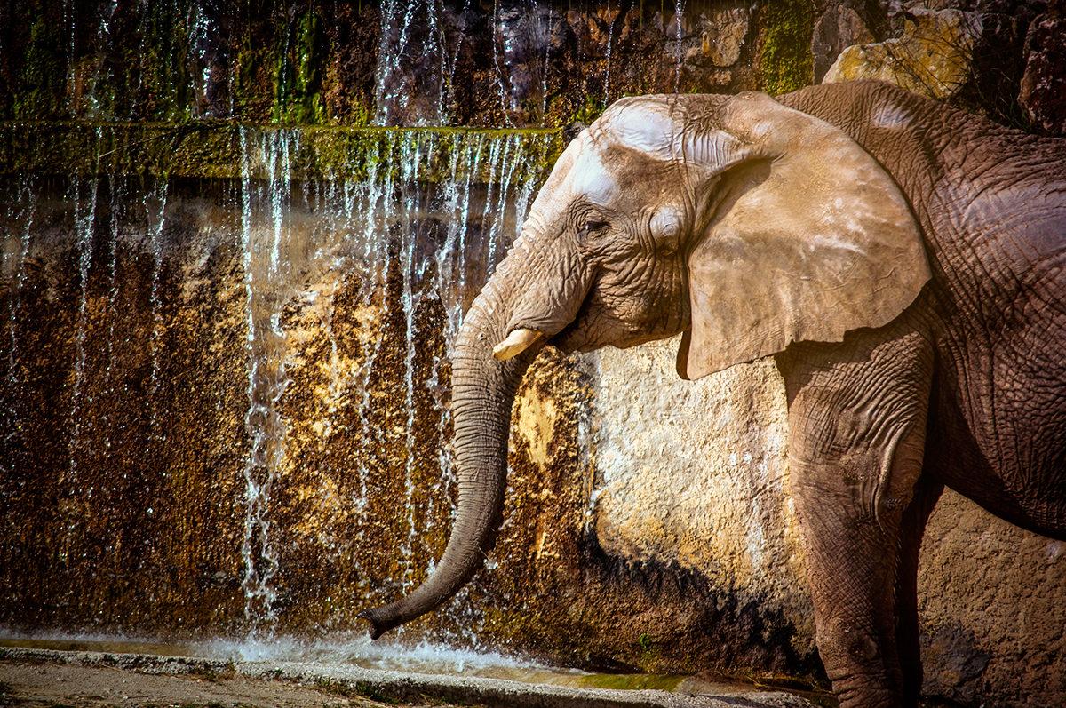 Слон в зоопарке Лиссабона