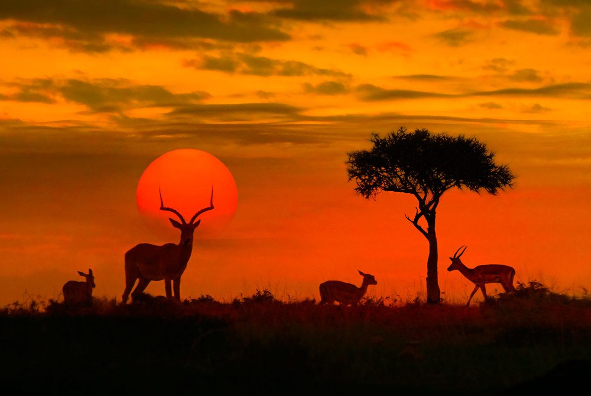 Природа Сенегала