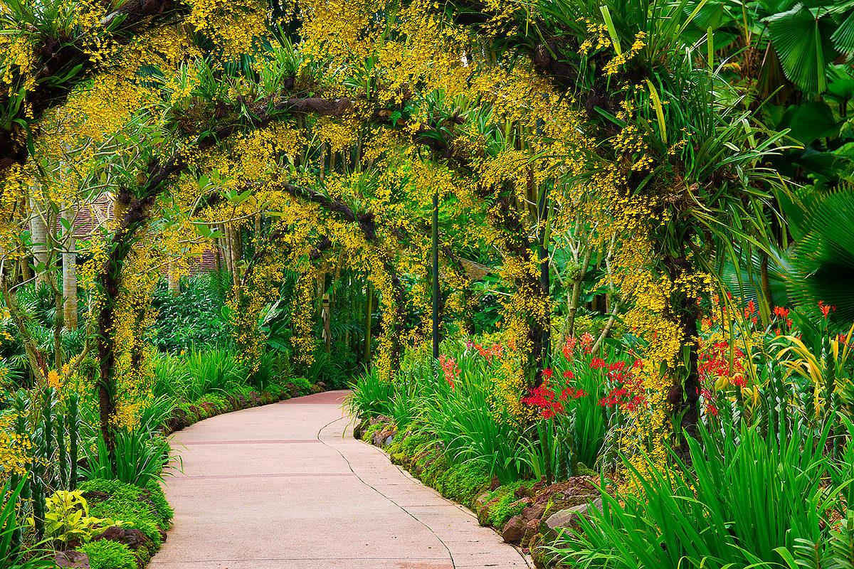 Ботанический сад, Сингапур