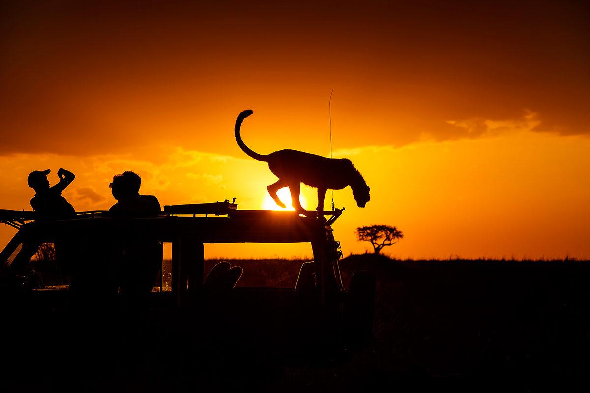 Познакомиться с животными в их естественной среде обитания