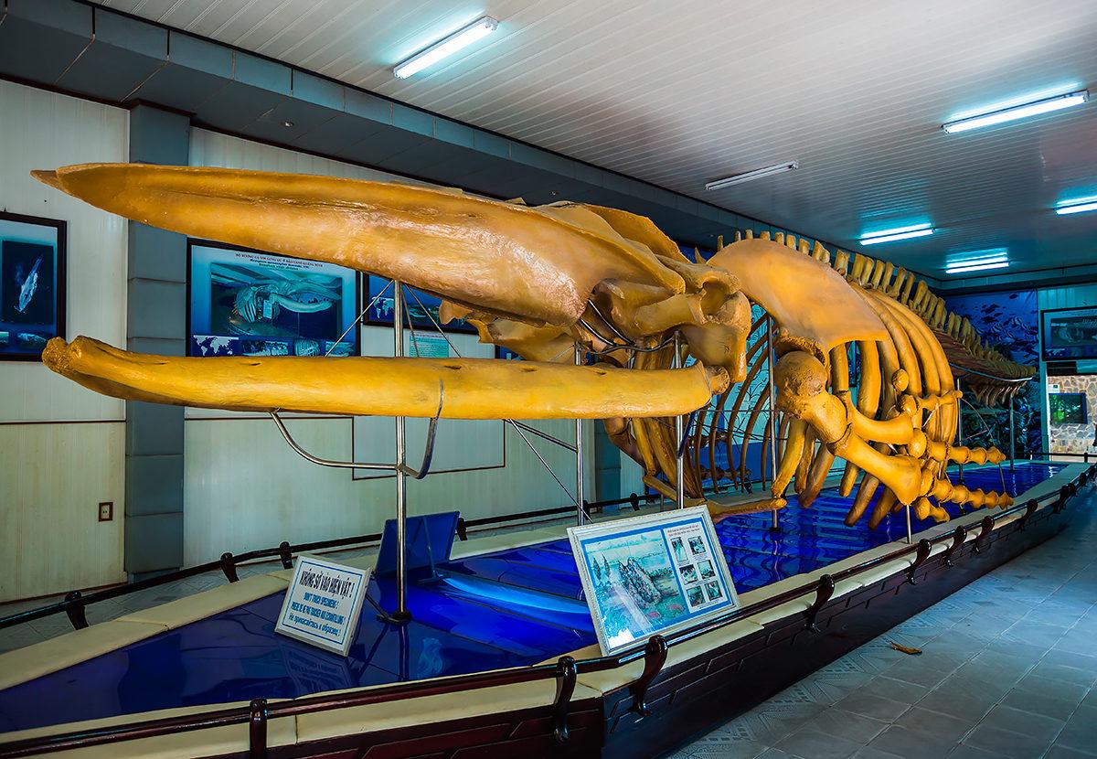 Экспонат скелета кита в Институте Океанографии