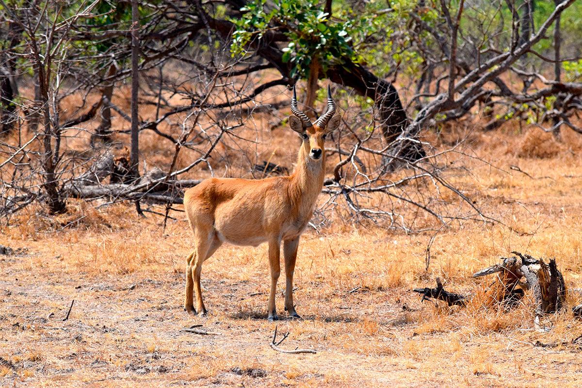 В национальном парке Кафуэ, Замбия