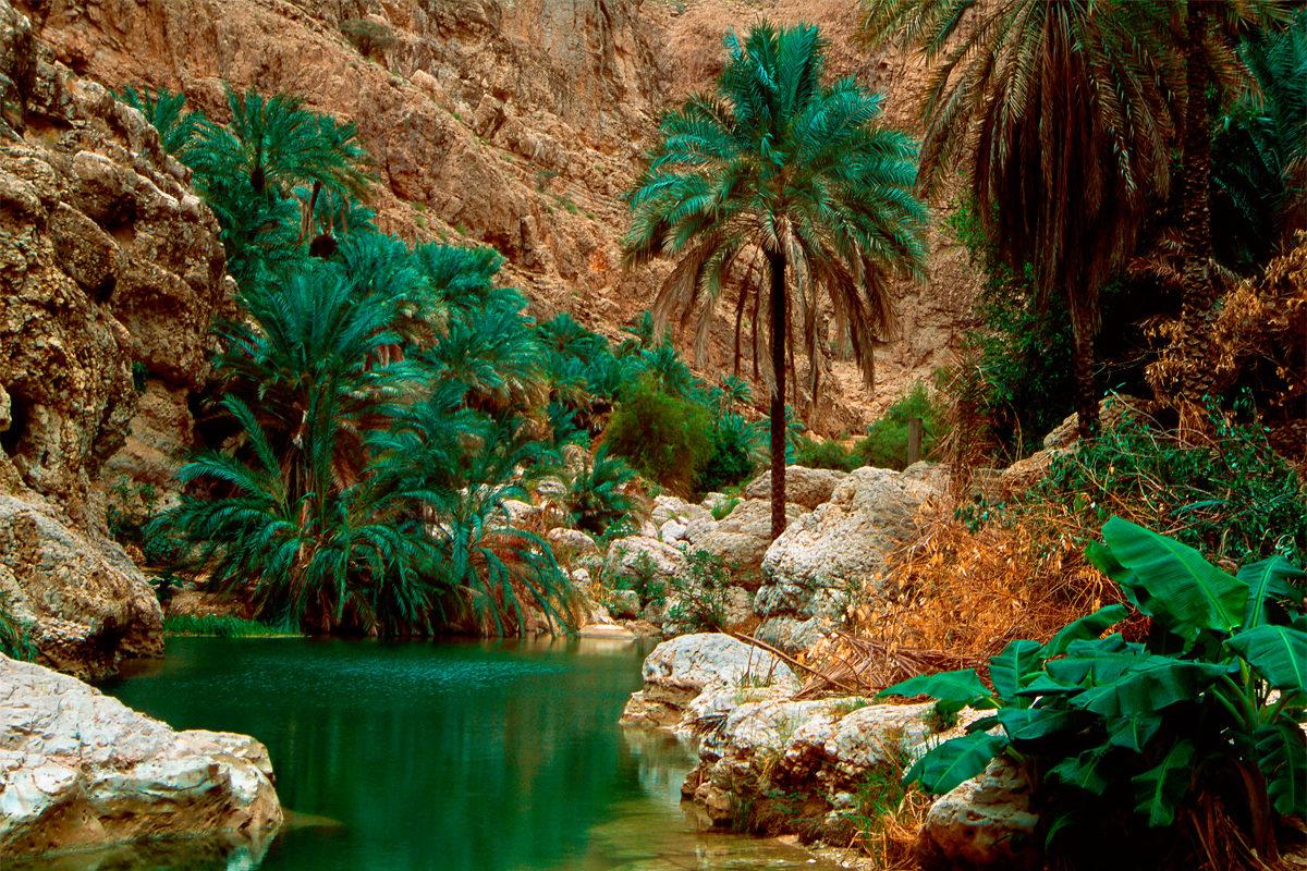 Райский оазис Вади Шаб
