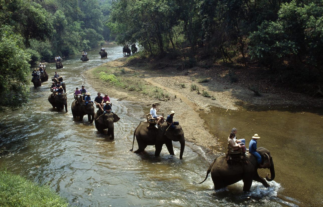 Чианг Дао Елефант учебный центр