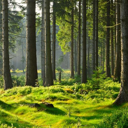 Орлеанский лес