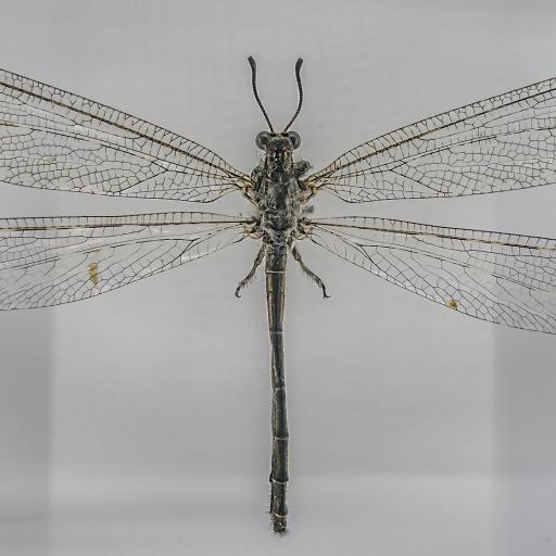 Музей насекомых мира и чудес природы