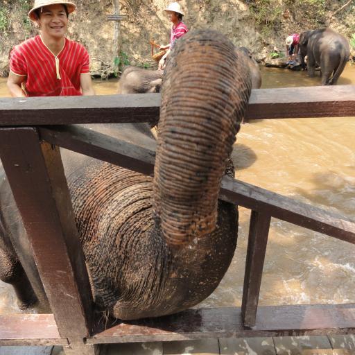 Слоновий лагерь