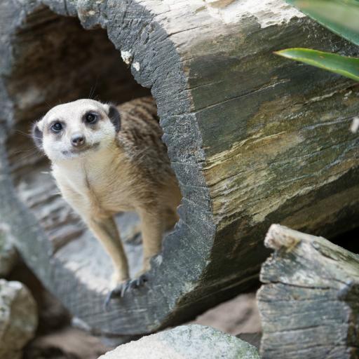 Зоопарк и Вольский лес