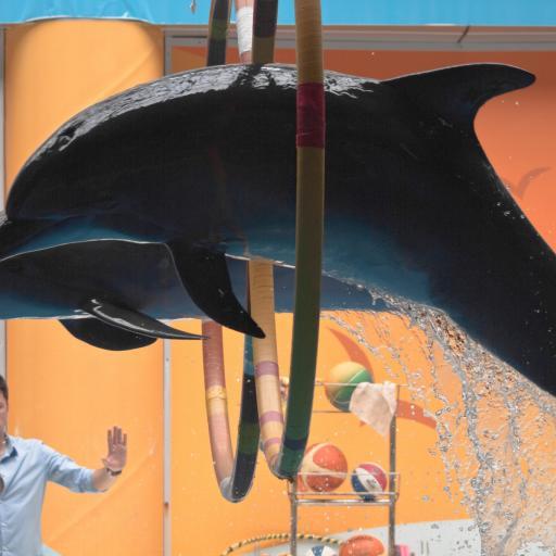 Дельфинарий Стамбула