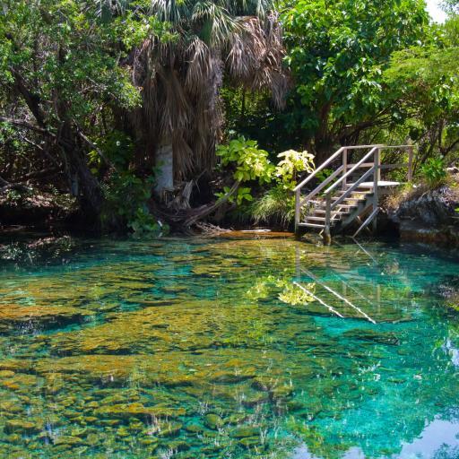 Экологический парк Indigenous Eyes