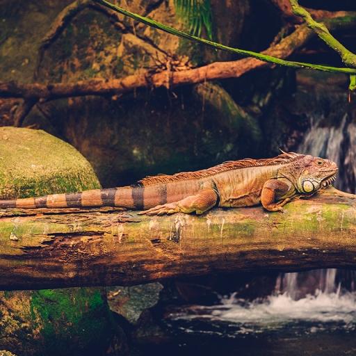 Водный зоопарк в Дюссельдорфе