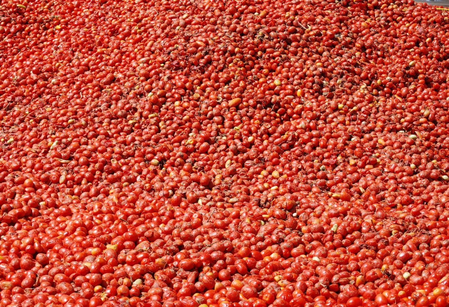 Томатина (La Tomatina)