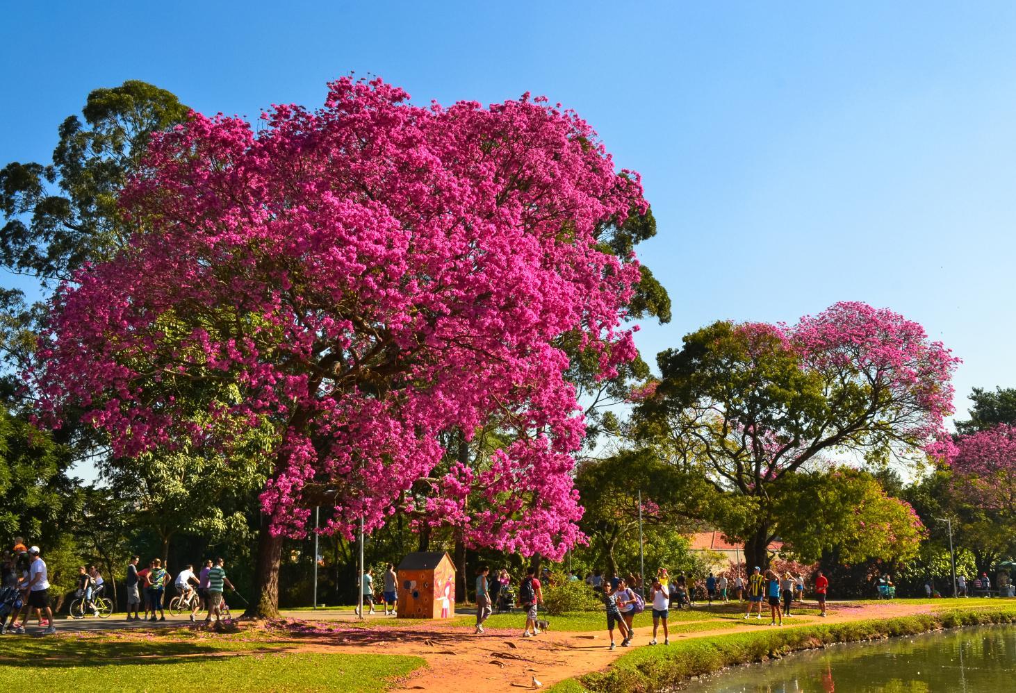 Ibirapuera Park, Сан-Паулу (Бразилия)