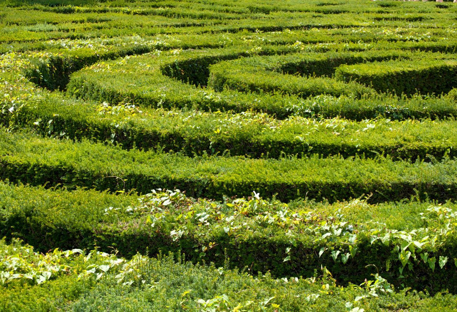 Longleat Hedge Maze, Великобритания