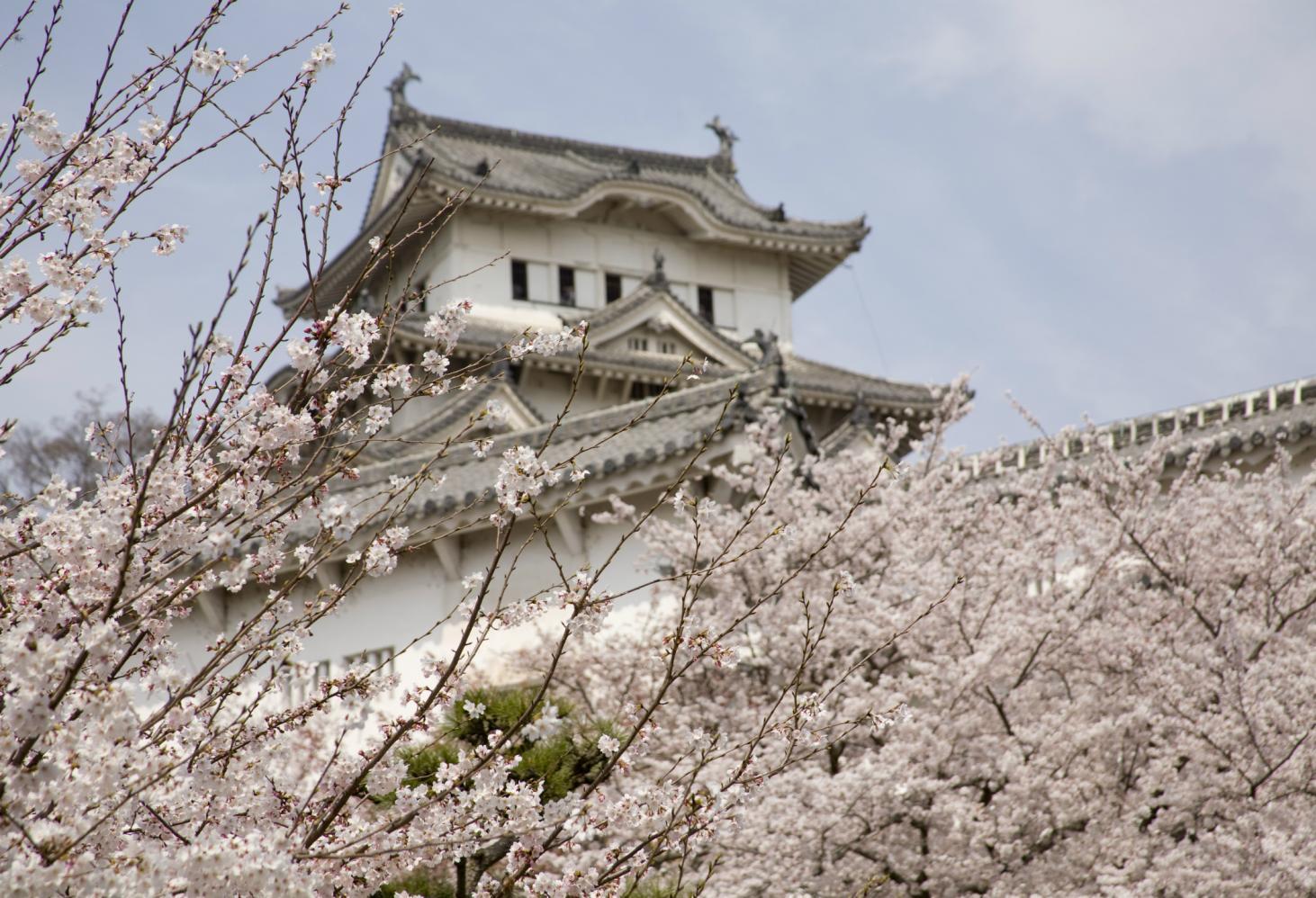 «О-ханами» — праздник весны