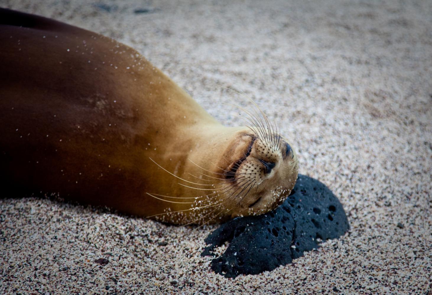 Тюлений отдых