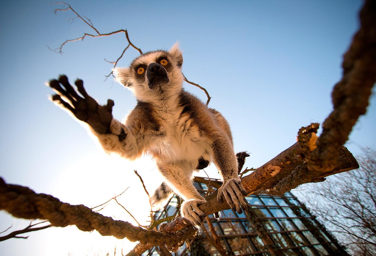 Пражский зоопарк, Чехия